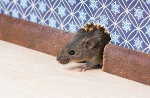 Keep mice out with Buckmaster's help
